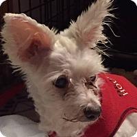 Adopt A Pet :: Priya - Bernardston, MA