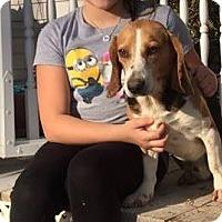 Adopt A Pet :: Lemon - Beacon, NY