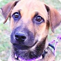 Adopt A Pet :: Robin - San Ramon, CA