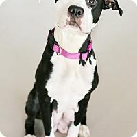 Adopt A Pet :: Carolina - Appleton, WI