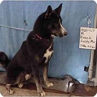 Adopt A Pet :: Hooch/Pending - Zanesville, OH