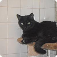 Adopt A Pet :: Marissa - white settlment, TX