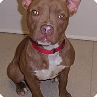 Adopt A Pet :: Murphy - Gary, IN