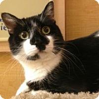 Adopt A Pet :: Felix - McHenry, IL