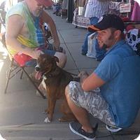 Adopt A Pet :: Shaka - Alamogordo, NM