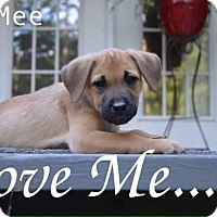 Adopt A Pet :: Mee Mee Adoption pending - East Hartford, CT
