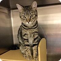Adopt A Pet :: Marbles - Colmar, PA