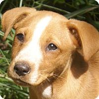 Adopt A Pet :: Captain - Staunton, VA