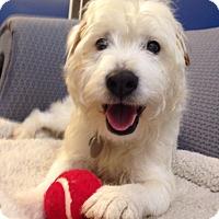 Adopt A Pet :: Buddy (Courtsey) - Richmond, VA