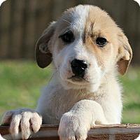 Adopt A Pet :: Fredrik - Windham, NH