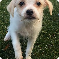 Adopt A Pet :: Jack - Los Angeles, CA