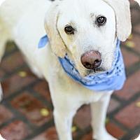 Adopt A Pet :: Connor - Baton Rouge, LA