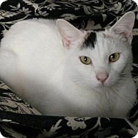 Adopt A Pet :: ALI - New york, NY