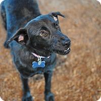Adopt A Pet :: Bonnie - Tanner, AL