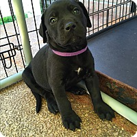 Adopt A Pet :: Bennett Miller~adopted! - Glastonbury, CT