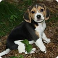 Adopt A Pet :: Triton - Charlottesville, VA