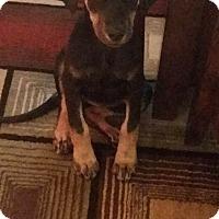 Adopt A Pet :: Josie - Albemarle, NC