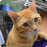 Adopt A Pet :: Caesar - Canastota, NY