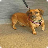 Adopt A Pet :: Mattie - Tracy, CA