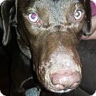 Adopt A Pet :: Buddy (COURTESY POST)
