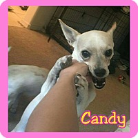 Adopt A Pet :: Candy - Mesa, AZ