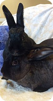 Other/Unknown Mix for adoption in Idaho Falls, Idaho - Digby