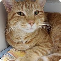 Adopt A Pet :: Orangeabella - Cloquet, MN