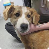 Adopt A Pet :: Trixie - Lincolnton, NC