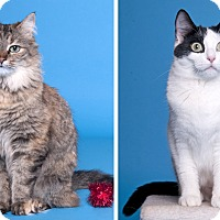 Adopt A Pet :: Waffles & NeNe - Chicago, IL