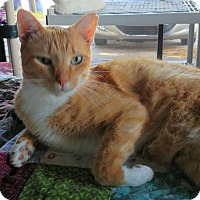 Adopt A Pet :: Freeway - New Port Richey, FL
