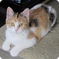 Adopt A Pet :: Amber - Glenwood, MN