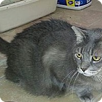 Adopt A Pet :: Smokey - Columbus, GA