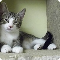 Adopt A Pet :: Charlie - Acme, PA