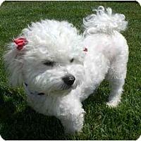 Adopt A Pet :: Trinity - La Costa, CA