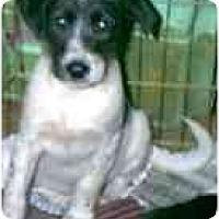 Adopt A Pet :: Brandy - dewey, AZ