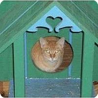 Adopt A Pet :: Thomas - McDonough, GA