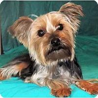 Adopt A Pet :: Chyna - Mooy, AL