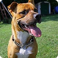 Adopt A Pet :: Marley - Douglas, ON