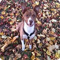Adopt A Pet :: Sammy - Bardonia, NY