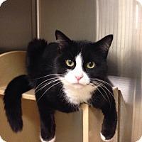Adopt A Pet :: Rocky - Muncie, IN