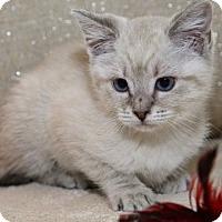 Adopt A Pet :: Haddie Bob - Davis, CA