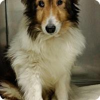 Adopt A Pet :: Gemini - COLUMBUS, OH