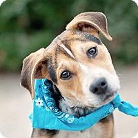 Adopt A Pet :: Patrick Milo - Kingwood, TX