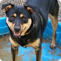Adopt A Pet :: zoey - Gainesville, GA