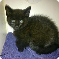 Adopt A Pet :: Roo - Hamilton, ON