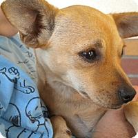 Adopt A Pet :: Cassie - Fresno, CA