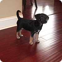 Adopt A Pet :: Allie - Homewood, AL