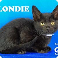 Adopt A Pet :: Blondie - Carencro, LA