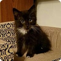 Adopt A Pet :: Rocket - Greenville, NC