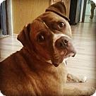 Adopt A Pet :: Holden